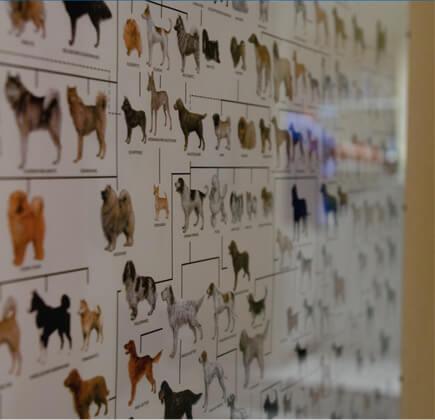 Aktuelles aus der Tierarztpraxis Anne Preising in Oer-Erkenschwick