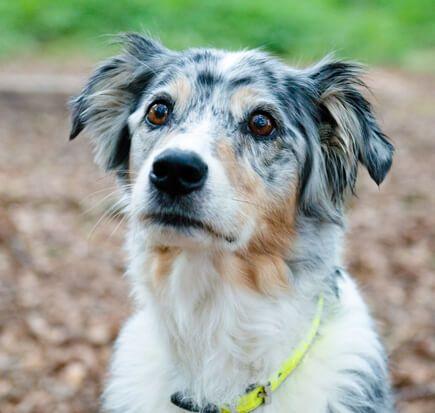Kleintierpraxis für Hunde in Oer-Erkenschwick