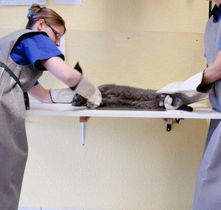 Tierarzt für Hasen in Oer-Erkenschwick