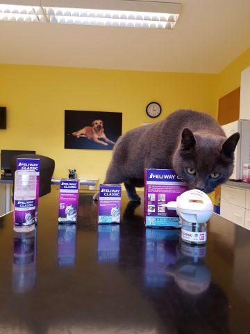 Katzen Stressreduktion feliway